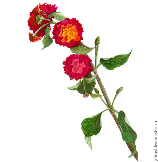 Картины цветов ручной работы. Ярмарка Мастеров - ручная работа. Купить Картина акварелью Турецкий Цветочек, малиновый  красный  зеленый. Handmade.