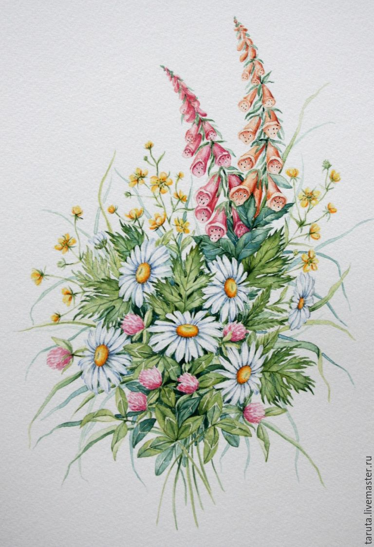 Рисунок цветов полевых