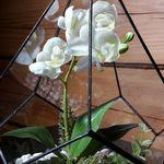 стеклянная лавка - Ярмарка Мастеров - ручная работа, handmade