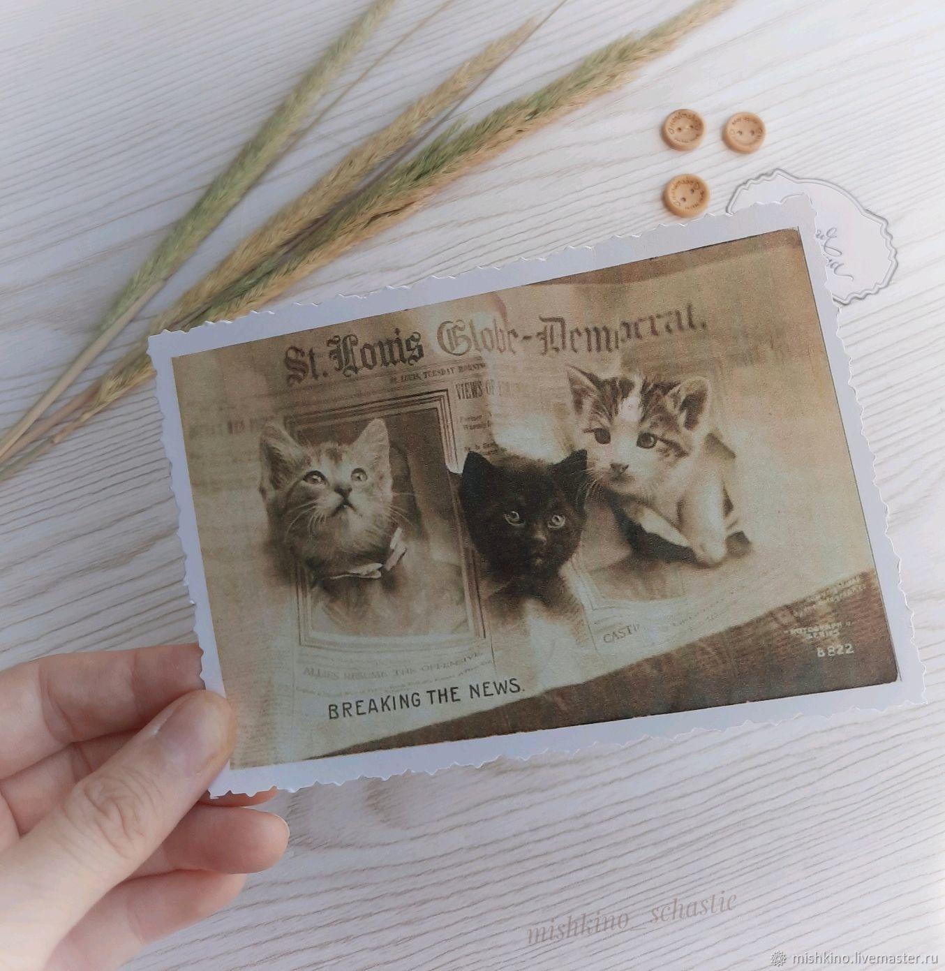Cat3 Postcard, Cards, Taganrog,  Фото №1