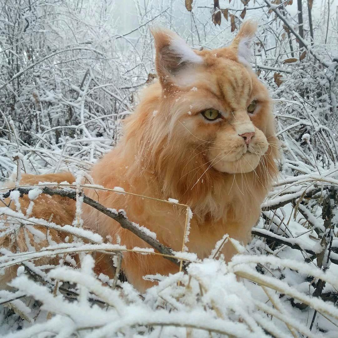 Рыжий кот Мей-кун, Интерьерная кукла, Пятигорск,  Фото №1