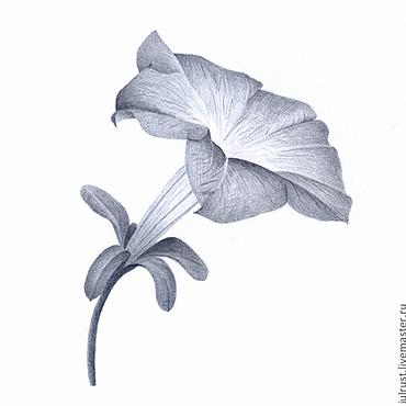 Картины и панно ручной работы. Ярмарка Мастеров - ручная работа Картина Петуния, рисунок карандашом серый белый графика. Handmade.