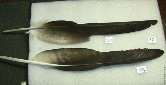 Перо орла маховое.37см.Оба за 200 или по одному по цене на фото.