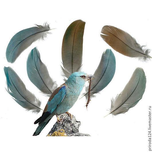 Покровные перья.