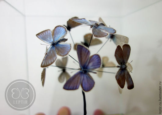 Персональные подарки ручной работы. Ярмарка Мастеров - ручная работа. Купить Бабочки в кубе - шарик из Голубянок в стеклянном кубе. Handmade.