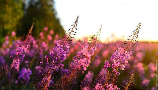 Алина Сапогова. Пейзаж ,картина в гостиную,  Авторская фотокартина `Иван чай`. Пейзаж , летнее поле. Фотокартина природа.Эксклюзивная художественная фотография.