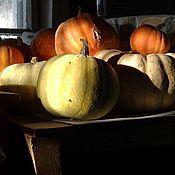 Картины и панно handmade. Livemaster - original item Photo pictures.Still life with pumpkins.Without photoshop.. Handmade.