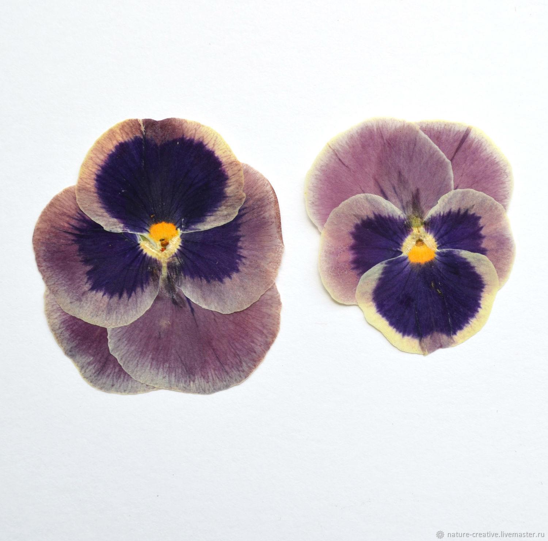 Где купить засушенные цветы для творчества каталог растений и цветов заказать почтой украина