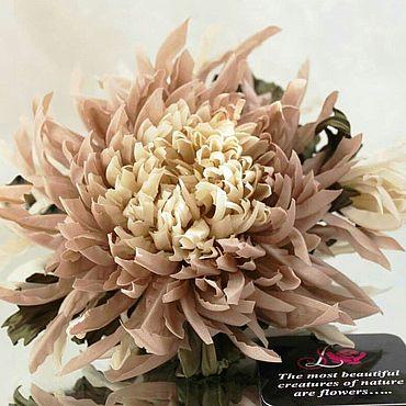 Цветы и флористика. Ярмарка Мастеров - ручная работа Цветы: Хризантема из шелка. Капучино. Handmade.