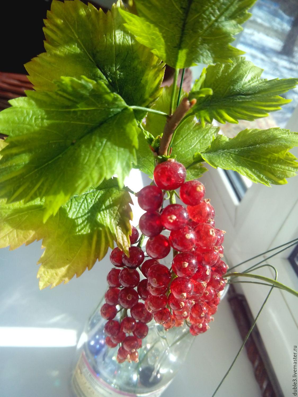 Красная смородина, Растения, Козьмодемьянск,  Фото №1