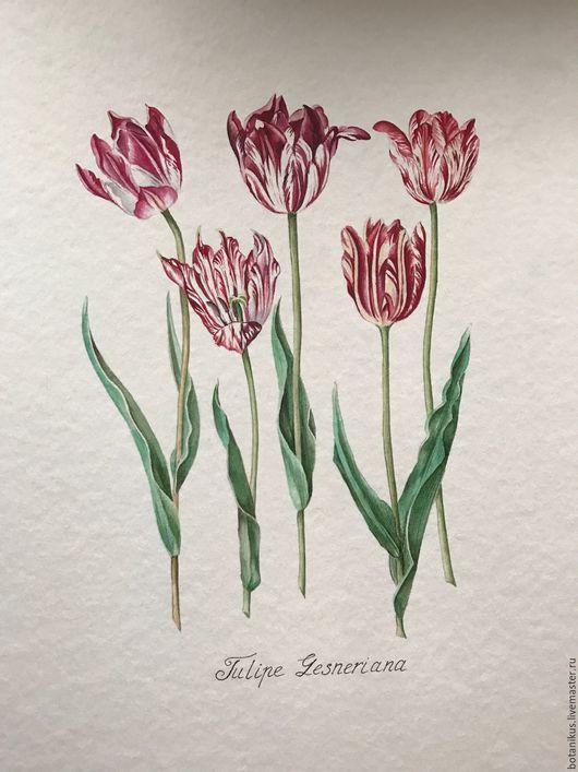 Картины цветов ручной работы. Ярмарка Мастеров - ручная работа. Купить Ботаническая иллюстрация. Тюльпаны. Handmade. Комбинированный, ботаническая иллюстрация