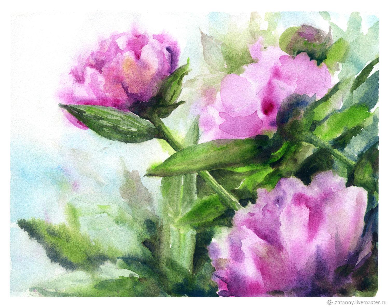 Watercolour `Peonies` Author: Zheltysheva Tatiana