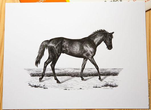 Английская верховая. Серия Лошади. Тушь. Размер листа 32см*24см, Светлана Маркина, LechuzaS