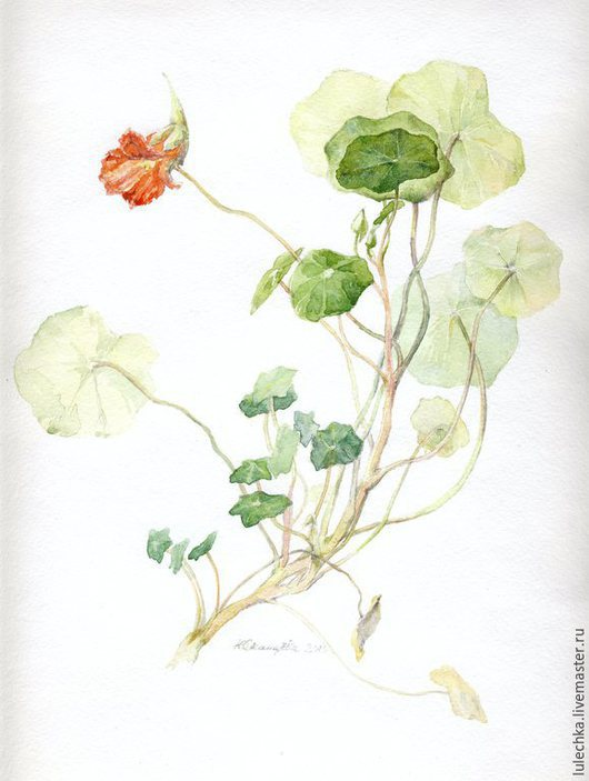 Картины цветов ручной работы. Ярмарка Мастеров - ручная работа. Купить Настурция. Handmade. Разноцветный, настурция, акварельный рисунок