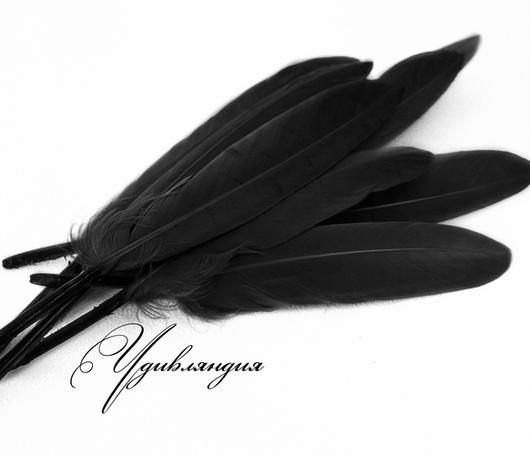 Другие виды рукоделия ручной работы. Ярмарка Мастеров - ручная работа. Купить Перо гуся натуральное, окрашенное черное №134.. Handmade.
