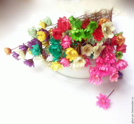 Другие виды рукоделия ручной работы. Ярмарка Мастеров - ручная работа. Купить Сухоцветы, сухие цветы гликсии 0,8-1см. Handmade.