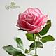 Цветы ручной работы. Роза из полимерной глины. Холодный фарфор.. КурОлеська (Богданович Олеся). Ярмарка Мастеров. Роза, подарок на