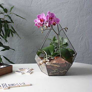 Цветы и флористика ручной работы. Ярмарка Мастеров - ручная работа Орхидариум в капле. Handmade.