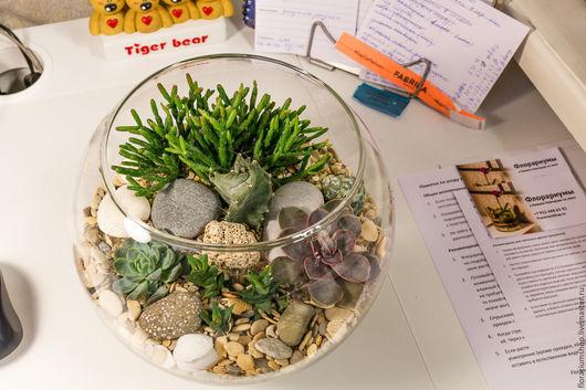 Флорариум в стеклянной вазе диаметром 22 см из кактусов и других суккулентов