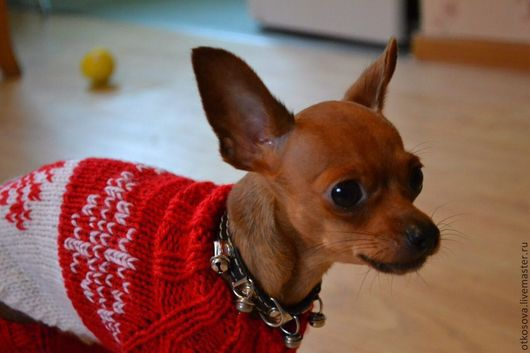 Одежда для собак, ручной работы. Ярмарка Мастеров - ручная работа. Купить Вязаный комбинезон для собачки. Handmade. Вязание спицами