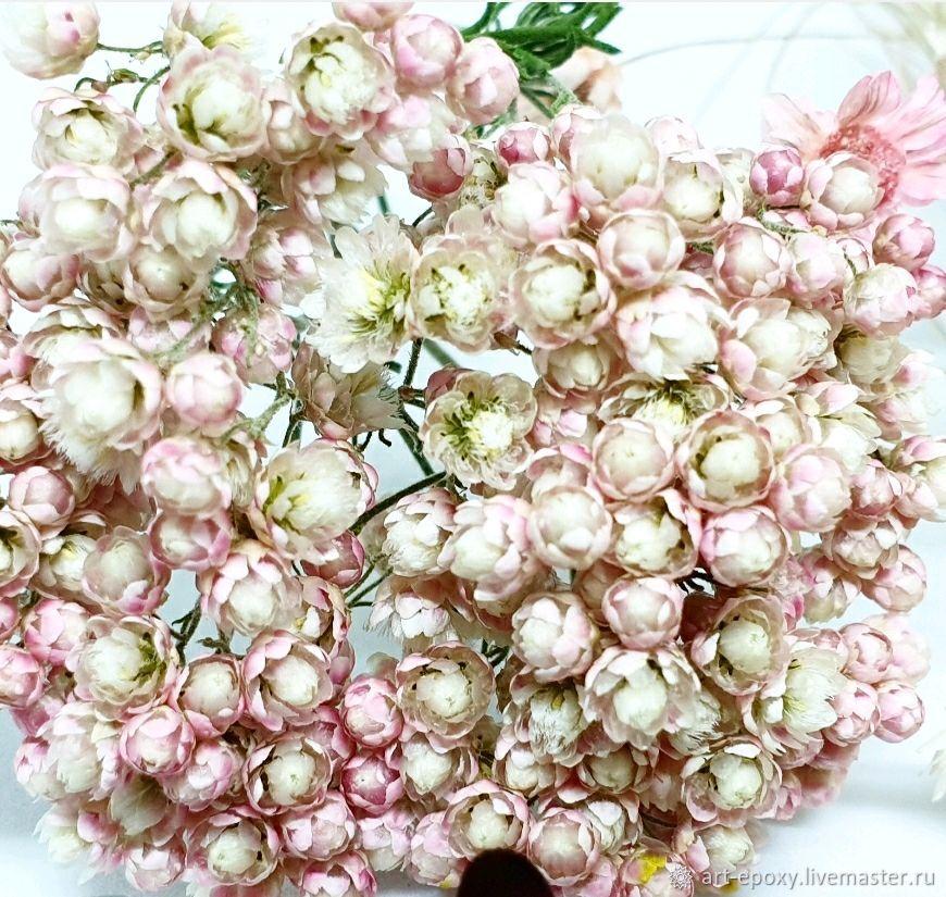 Stamnos, dried flowers, The dried flowers, Volgograd,  Фото №1