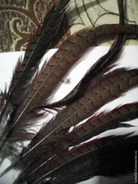 Другие виды рукоделия ручной работы. Ярмарка Мастеров - ручная работа. Купить перья фазана дикого кавказского Хвостовые. Handmade.