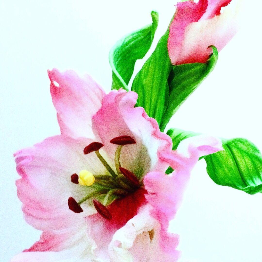 Цветы гладиолус японский купить тюльпаны в киеве купить