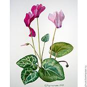 Картины и панно ручной работы. Ярмарка Мастеров - ручная работа Картина акварелью Цикламены Цветут, розовый фуксия зеленый цикламен. Handmade.