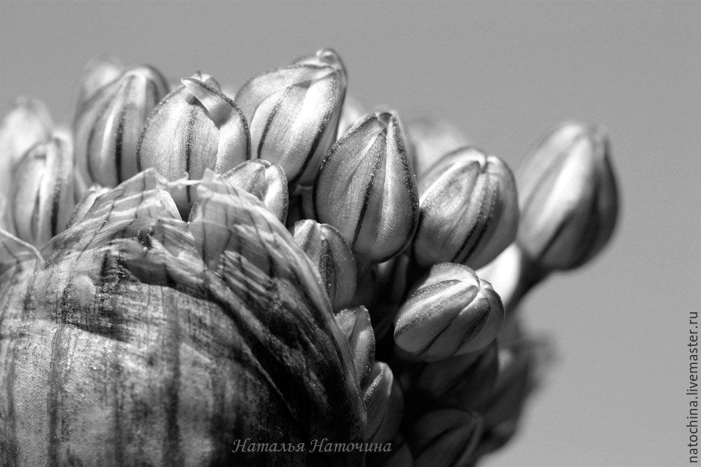Фотография черно-белая Цветок, Фотокартины, Санкт-Петербург,  Фото №1
