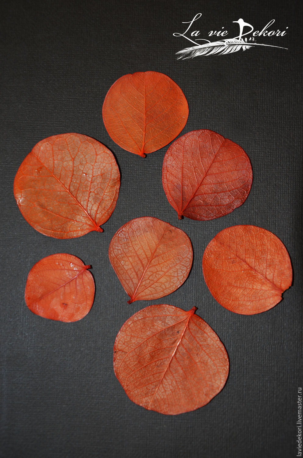The leaves are 'coin', 10 PCs, Natural materials, Moscow,  Фото №1