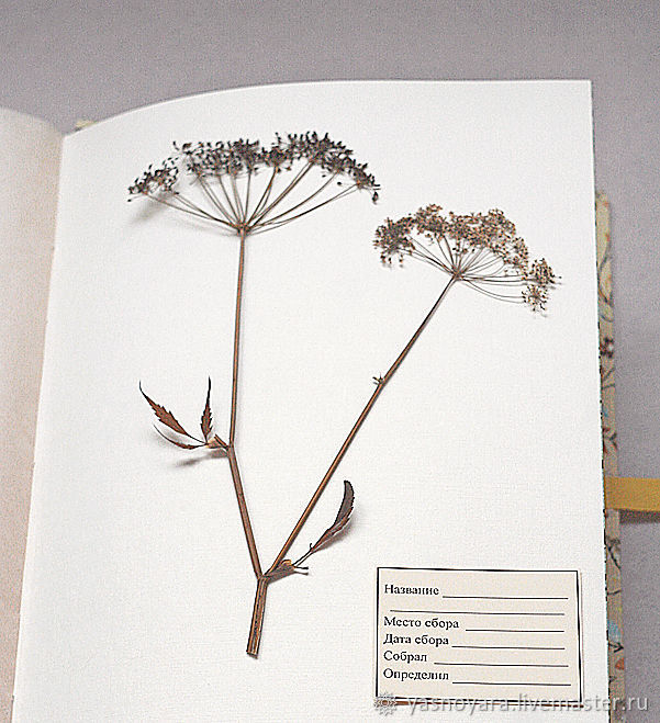 Album for a herbarium Sunny day (A4, 25 plants), Photo albums, Moscow,  Фото №1