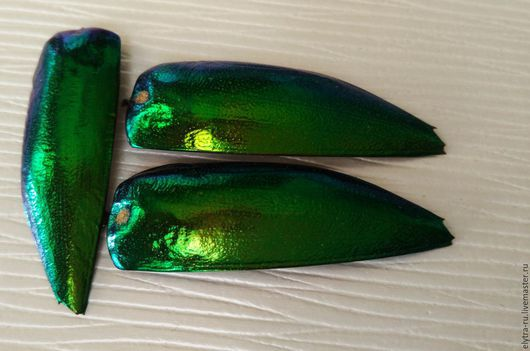 Для украшений ручной работы. Ярмарка Мастеров - ручная работа. Купить 100шт Желтовато-зеленые крылья златки Sternocera. Handmade.