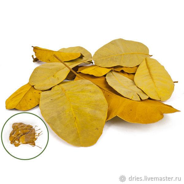 Материалы: листья мандиока большие жёлтый, , Москва, Фото №1