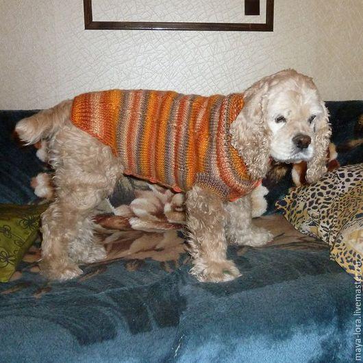 """Одежда для собак, ручной работы. Ярмарка Мастеров - ручная работа. Купить Одежда для собак. Кофточка """"Восторг"""". Handmade. Разноцветный, цвергпинчер"""