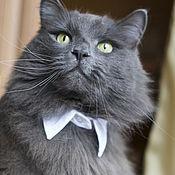Для домашних животных, ручной работы. Ярмарка Мастеров - ручная работа Ошейник-воротник для кошек и собак мелких пород.. Handmade.