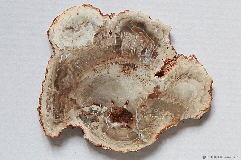 Окаменелость дерева. Для коллекции, Минералы, Москва,  Фото №1