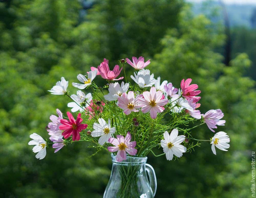 Роза, цветок космея букеты фото