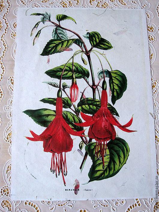 """Репродукции ручной работы. Ярмарка Мастеров - ручная работа. Купить """"Panteek- цветы"""" - принт на бумаге  ручной работы. Handmade. Белый"""