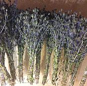 Цветы и флористика handmade. Livemaster - original item Thistle. The dried flowers.bouquet collection 2017. Guardian.. Handmade.
