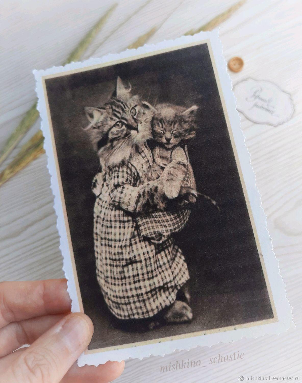 Cat2 Postcard, Cards, Taganrog,  Фото №1
