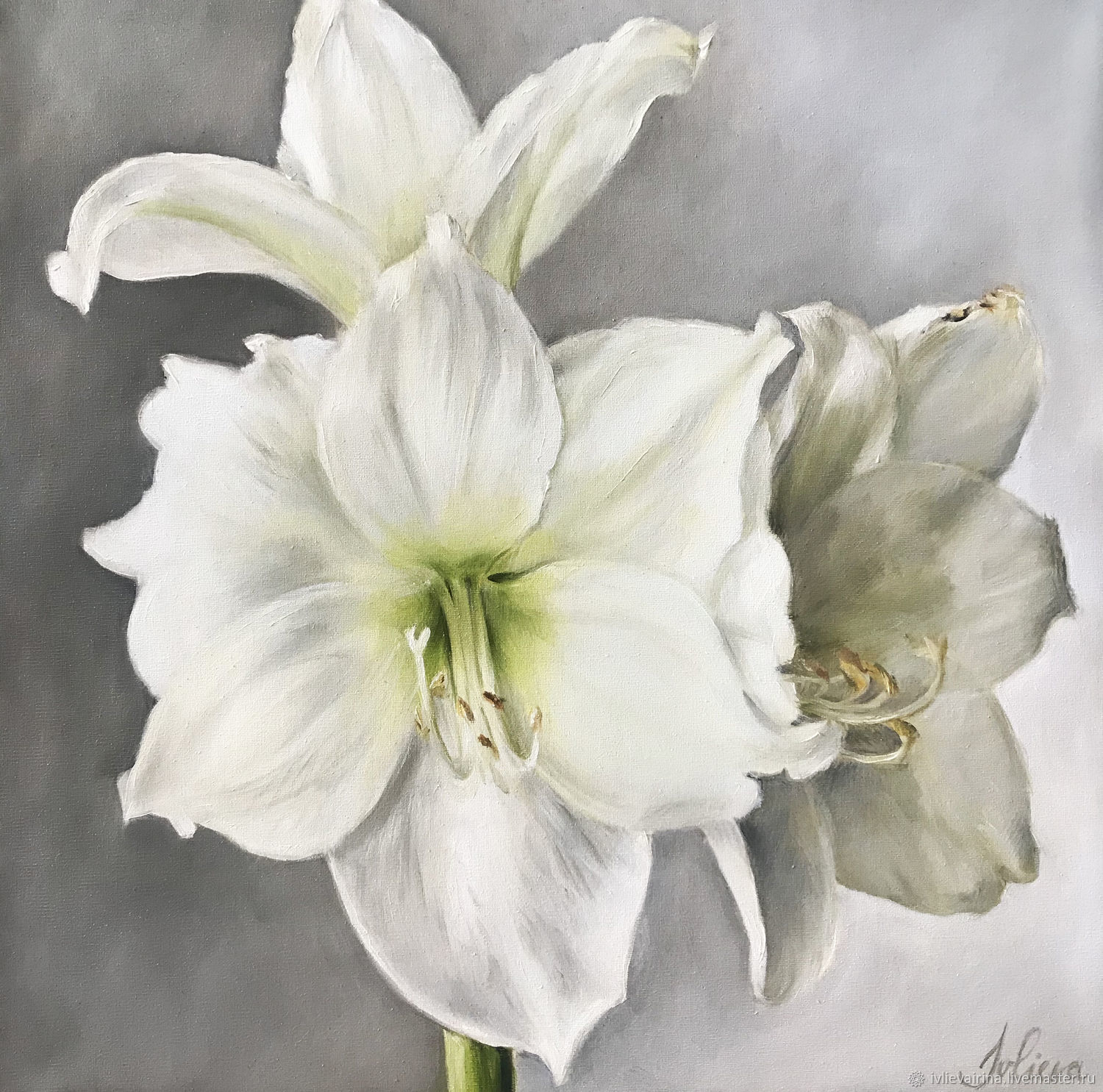 Oil painting with white flowers 'Amaryllis' 30*30 cm, Pictures, Moscow,  Фото №1