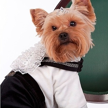 """Для домашних животных, ручной работы. Ярмарка Мастеров - ручная работа Костюм нарядный """"Принц"""". Handmade."""