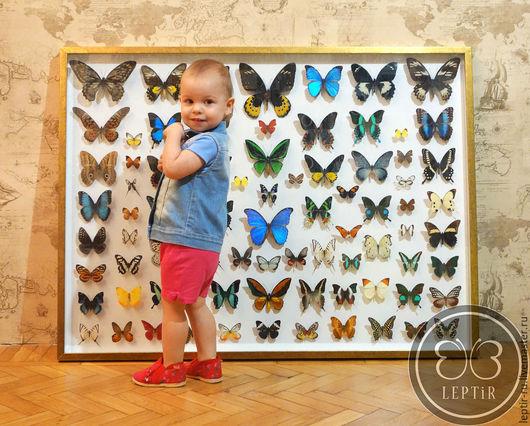 Дизайн интерьеров ручной работы. Ярмарка Мастеров - ручная работа. Купить Бабочки Мира - уникальное панно из дневных бабочек. Handmade.