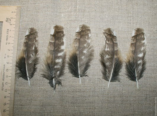 Другие виды рукоделия ручной работы. Ярмарка Мастеров - ручная работа. Купить Перья совы (неясыть). Handmade. Серый