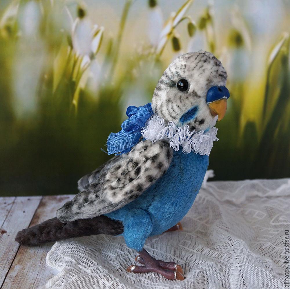 волнистый попугай фото синий