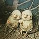 Куклы и игрушки ручной работы. Заказать Личико овечки из флюмо. Елена Коверзнева (ElenaKoverzneva). Ярмарка Мастеров. Овечка игрушка, роспись
