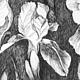 Картины цветов ручной работы. Заказать Ирисы. Наталья Атлянова. Ярмарка Мастеров. Лето, черно-белое