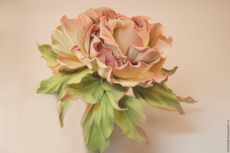 фото цветок чайная роза