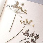 Канцелярские товары handmade. Livemaster - original item Album for a herbarium Tenderness (A4, 25 plants). Handmade.