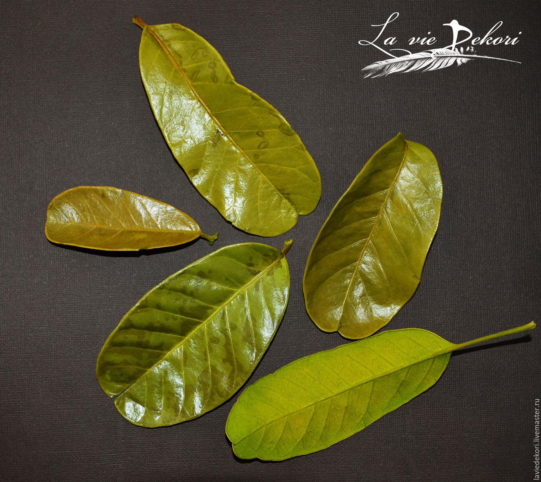 Leaves 'Mandioca', 3 PCs, Natural materials, Moscow,  Фото №1